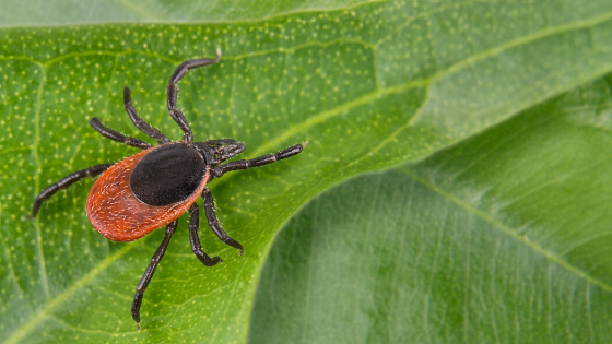 Lyme: The Great Imitator